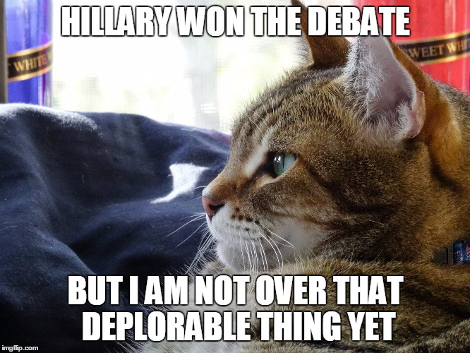 WINNING A DEBATE IS ONE THING GETTING PERSONAL IS ANOTHER |  HILLARY WON THE DEBATE; BUT I AM NOT OVER THAT DEPLORABLE THING YET | image tagged in thoughtful cat,election 2016,hillary clinton 2016,trump 2016,basket of deplorables | made w/ Imgflip meme maker