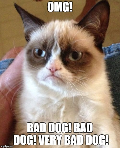 Grumpy Cat Meme | OMG! BAD DOG! BAD DOG! VERY BAD DOG! | image tagged in memes,grumpy cat | made w/ Imgflip meme maker