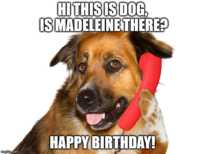 Dog On The Phone | HI THIS IS DOG, IS MADELEINE THERE? HAPPY BIRTHDAY! | image tagged in dog on the phone | made w/ Imgflip meme maker