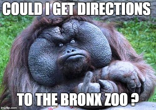 COULD I GET DIRECTIONS TO THE BRONX ZOO ? | made w/ Imgflip meme maker