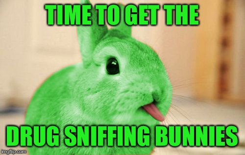 RayBunny | TIME TO GET THE DRUG SNIFFING BUNNIES | image tagged in raybunny | made w/ Imgflip meme maker