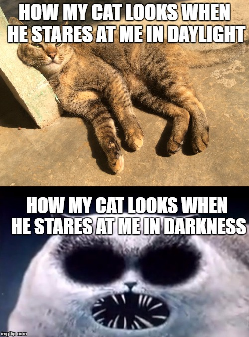 Creepy cat at night | HOW MY CAT LOOKS WHEN HE STARES AT ME IN DAYLIGHT HOW MY CAT LOOKS WHEN HE STARES AT ME IN DARKNESS | image tagged in cats,flapkack cat,creepy,daylight,darkness,memes | made w/ Imgflip meme maker