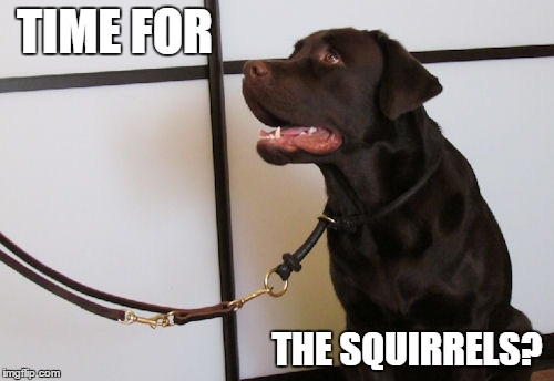 TIME FOR THE SQUIRRELS? | made w/ Imgflip meme maker