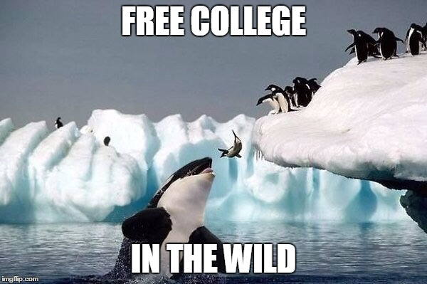 Killer whale | FREE COLLEGE IN THE WILD | image tagged in killer whale | made w/ Imgflip meme maker