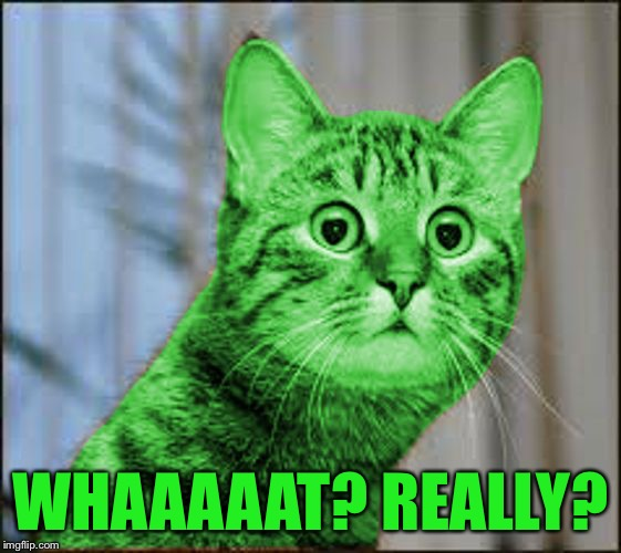 RayCat WTF | WHAAAAAT? REALLY? | image tagged in raycat wtf | made w/ Imgflip meme maker