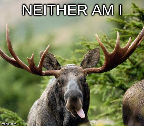 mainiac moose | NEITHER AM I | image tagged in mainiac moose | made w/ Imgflip meme maker