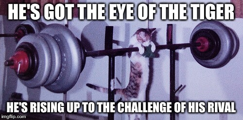 Cat, are you sure you can bench that much? You sure this isn't the catnip talking? | HE'S GOT THE EYE OF THE TIGER HE'S RISING UP TO THE CHALLENGE OF HIS RIVAL | image tagged in cats,working out,eye of the tiger,memes | made w/ Imgflip meme maker