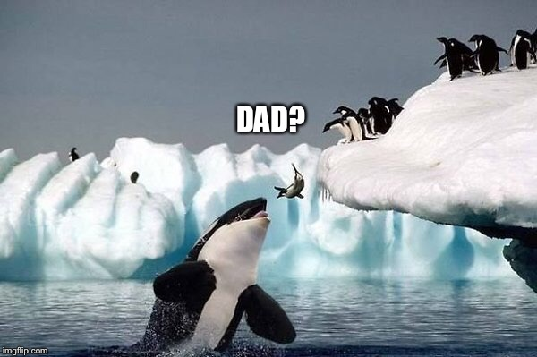Killer whale | DAD? | image tagged in killer whale | made w/ Imgflip meme maker