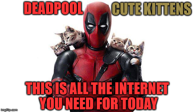 This Is All The Internet You Need Today |  DEADPOOL; CUTE KITTENS; THIS IS ALL THE INTERNET YOU NEED FOR TODAY | image tagged in deadpool with kittens,cute kittens,my templates challenge,is this a clue,ready for a sequel,memes | made w/ Imgflip meme maker