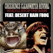 Desert Rain Frog Imgflip