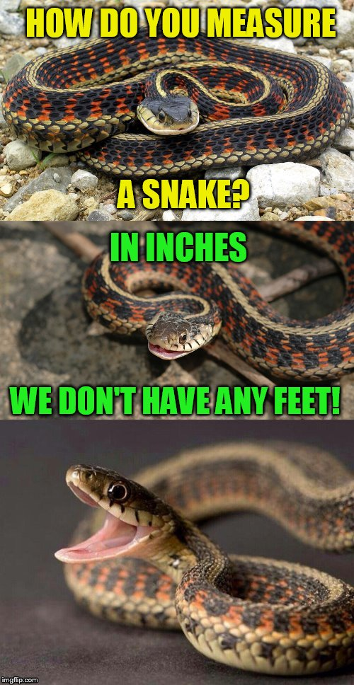 Snake Puns | HOW DO YOU MEASURE A SNAKE? IN INCHES WE DON'T HAVE ANY FEET! | image tagged in snake puns,funny memes,snakes,jokes,measure | made w/ Imgflip meme maker