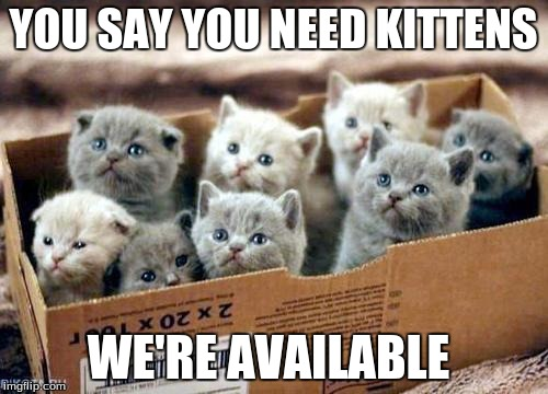 YOU SAY YOU NEED KITTENS WE'RE AVAILABLE | made w/ Imgflip meme maker