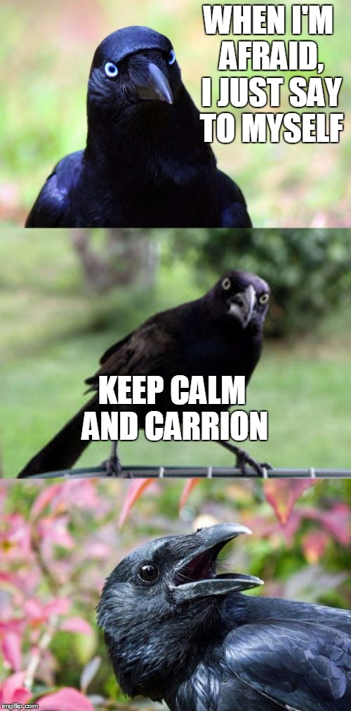 bad pun crow | WHEN I'M AFRAID, I JUST SAY TO MYSELF KEEP CALM AND CARRION | image tagged in bad pun crow | made w/ Imgflip meme maker