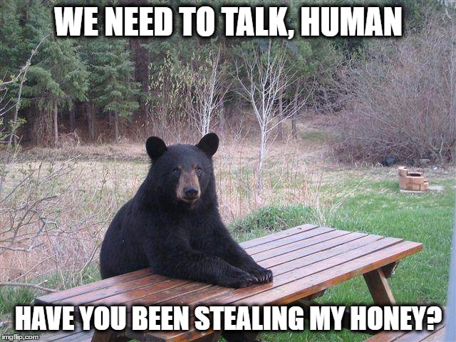 Bear at Picnic Table | WE NEED TO TALK, HUMAN HAVE YOU BEEN STEALING MY HONEY? | image tagged in bear at picnic table | made w/ Imgflip meme maker