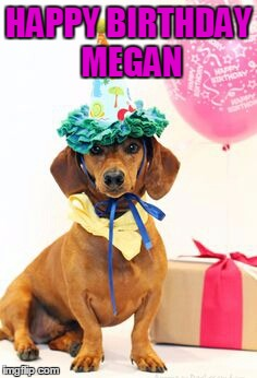 1bplvx dachshund birthday meme generator imgflip