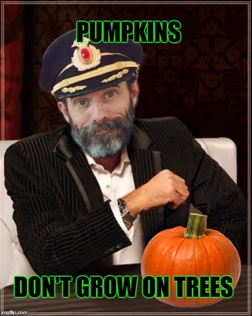 Most obviously interesting pumpkin | PUMPKINS DON'T GROW ON TREES | image tagged in most obviously interesting pumpkin,pumpkin,pumpkin spice,money,success,captain obvious | made w/ Imgflip meme maker