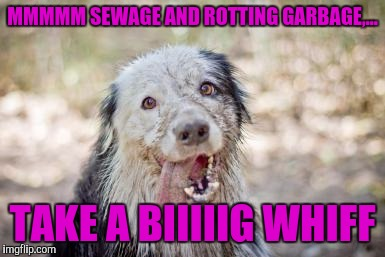 MMMMM SEWAGE AND ROTTING GARBAGE,... TAKE A BIIIIIG WHIFF | made w/ Imgflip meme maker