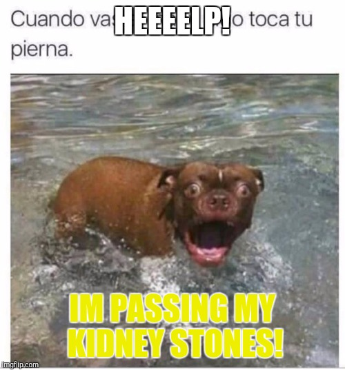 HEEEELP! IM PASSING MY KIDNEY STONES! | image tagged in pets | made w/ Imgflip meme maker