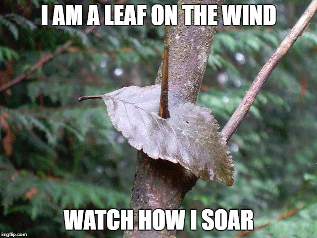 oops |  I AM A LEAF ON THE WIND; WATCH HOW I SOAR | image tagged in wash,serenity,firefly | made w/ Imgflip meme maker