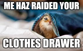 ME HAZ RAIDED YOUR CLOTHES DRAWER | image tagged in funny cat | made w/ Imgflip meme maker