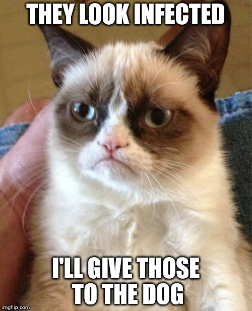 Grumpy Cat Meme | THEY LOOK INFECTED I'LL GIVE THOSE TO THE DOG | image tagged in memes,grumpy cat | made w/ Imgflip meme maker