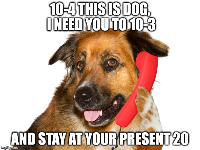 Dog On The Phone | 10-4 THIS IS DOG, I NEED YOU TO 10-3 AND STAY AT YOUR PRESENT 20 | image tagged in dog on the phone | made w/ Imgflip meme maker