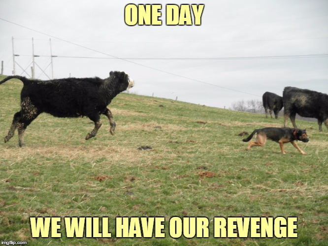 ONE DAY WE WILL HAVE OUR REVENGE | made w/ Imgflip meme maker