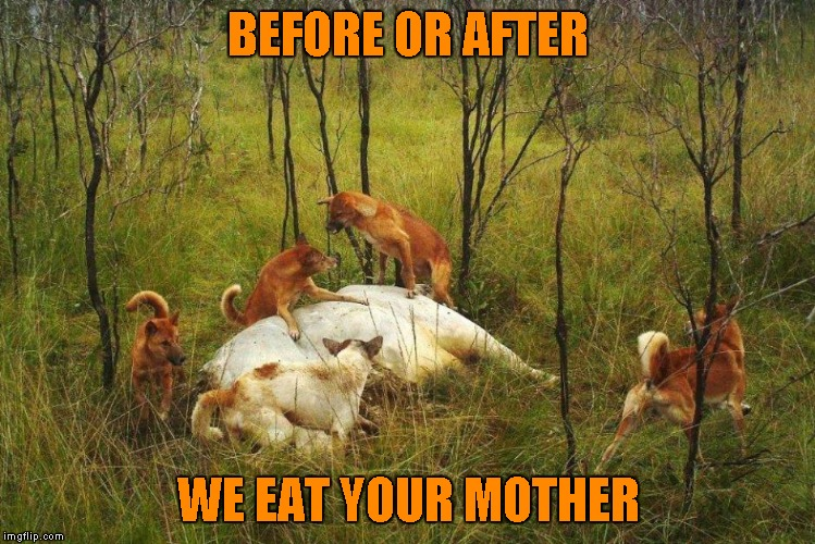 BEFORE OR AFTER WE EAT YOUR MOTHER | made w/ Imgflip meme maker