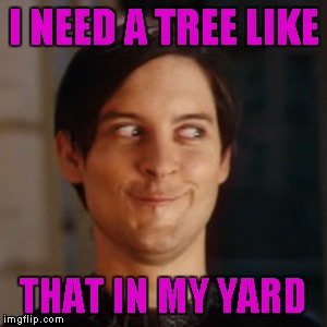 I NEED A TREE LIKE THAT IN MY YARD | made w/ Imgflip meme maker