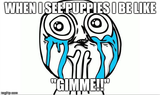 "WHEN I SEE PUPPIES I BE LIKE ""GIMME!!"" 