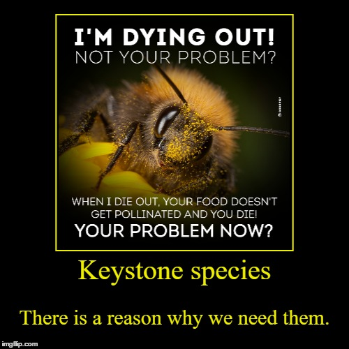 Bees Are Important | Keystone species | There is a reason why we need them. | image tagged in funny,demotivationals,keystone species,bees,problem,pollination | made w/ Imgflip demotivational maker