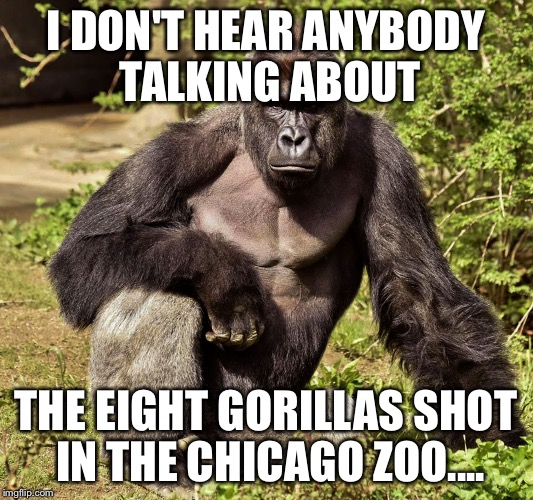 I DON'T HEAR ANYBODY TALKING ABOUT THE EIGHT GORILLAS SHOT IN THE CHICAGO ZOO.... | image tagged in harambe,chicago | made w/ Imgflip meme maker