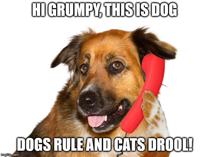Hi, This Is Dog | HI GRUMPY, THIS IS DOG DOGS RULE AND CATS DROOL! | image tagged in dog on the phone,memes,my templates challenge,grumpy cat,dogs rule,cats drool | made w/ Imgflip meme maker