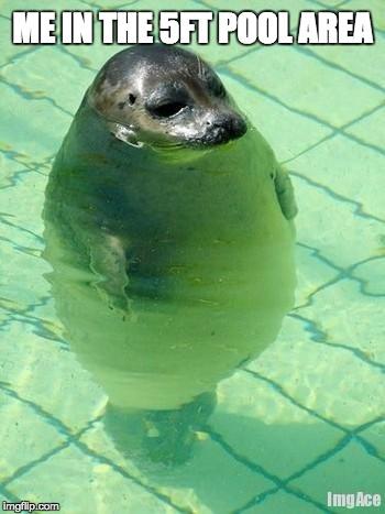 1bss9l standing seal meme generator imgflip,Seal Meme
