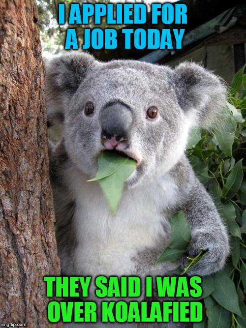 Surprised Koala Meme | I APPLIED FOR A JOB TODAY THEY SAID I WAS OVER KOALAFIED | image tagged in memes,surprised koala | made w/ Imgflip meme maker