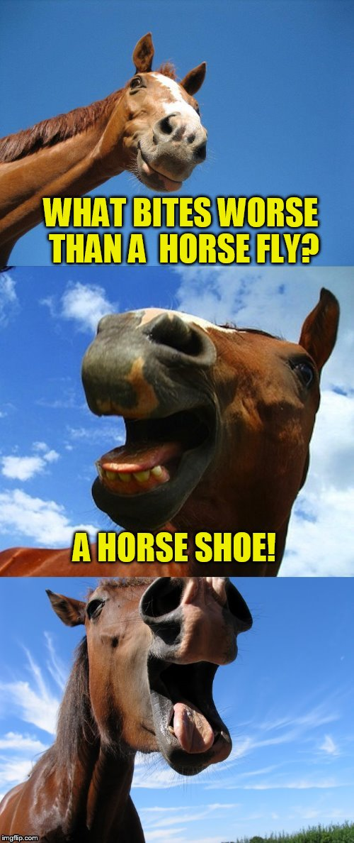 Just Horsing Around | WHAT BITES WORSE THAN A  HORSE FLY? A HORSE SHOE! | image tagged in just horsing around | made w/ Imgflip meme maker