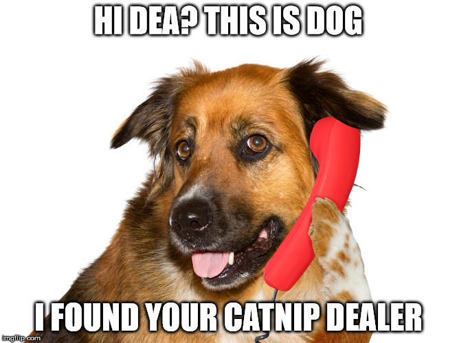 Dog On The Phone | HI DEA? THIS IS DOG I FOUND YOUR CATNIP DEALER | image tagged in dog on the phone | made w/ Imgflip meme maker