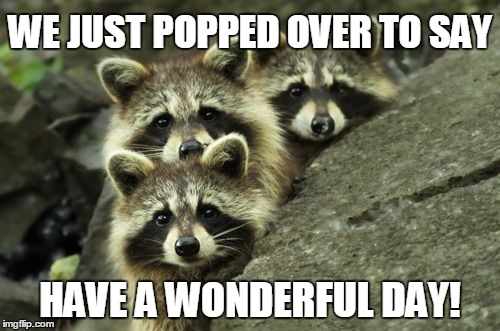 It's Another Day ImgFlippers! | WE JUST POPPED OVER TO SAY HAVE A WONDERFUL DAY! | image tagged in raccoon,have a nice day | made w/ Imgflip meme maker