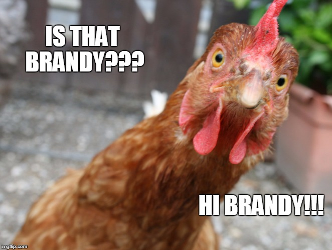 IS THAT BRANDY??? HI BRANDY!!! | made w/ Imgflip meme maker