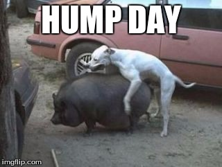 HUMP DAY | made w/ Imgflip meme maker