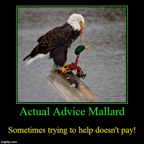 Actual Advice Mallard | Actual Advice Mallard | Sometimes trying to help doesn't pay! | image tagged in funny,demotivationals,actual advice mallard,helping,don't listen,bald eagle | made w/ Imgflip demotivational maker