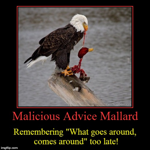 "Malicious Advice Mallard | Malicious Advice Mallard | Remembering ""What goes around, comes around"" too late! 