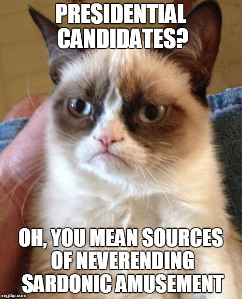 Grumpy Cat Meme | PRESIDENTIAL CANDIDATES? OH, YOU MEAN SOURCES OF NEVERENDING SARDONIC AMUSEMENT | image tagged in memes,grumpy cat | made w/ Imgflip meme maker