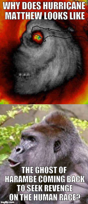 Am I only one who sees it? | WHY DOES HURRICANE MATTHEW LOOKS LIKE THE GHOST OF HARAMBE COMING BACK TO SEEK REVENGE ON THE HUMAN RACE? | image tagged in harambe,hurricane matthew,bacon,iwanttobebacon | made w/ Imgflip meme maker