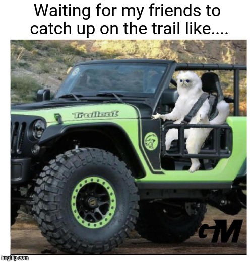 Trailcat gone wild | Waiting for my friends to catch up on the trail like.... | image tagged in jeep,jeep chase,offroad,funny memes | made w/ Imgflip meme maker