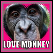 Love Monkey | LOVE MONKEY | image tagged in love monkey,monkey,love | made w/ Imgflip meme maker