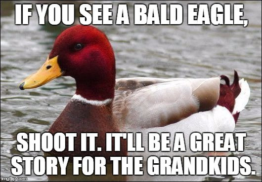 IF YOU SEE A BALD EAGLE, SHOOT IT. IT'LL BE A GREAT STORY FOR THE GRANDKIDS. | made w/ Imgflip meme maker