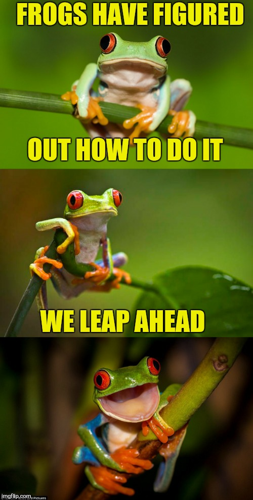 Frog Puns | FROGS HAVE FIGURED OUT HOW TO DO IT WE LEAP AHEAD | image tagged in frog puns | made w/ Imgflip meme maker
