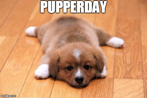 PUPPERDAY | made w/ Imgflip meme maker