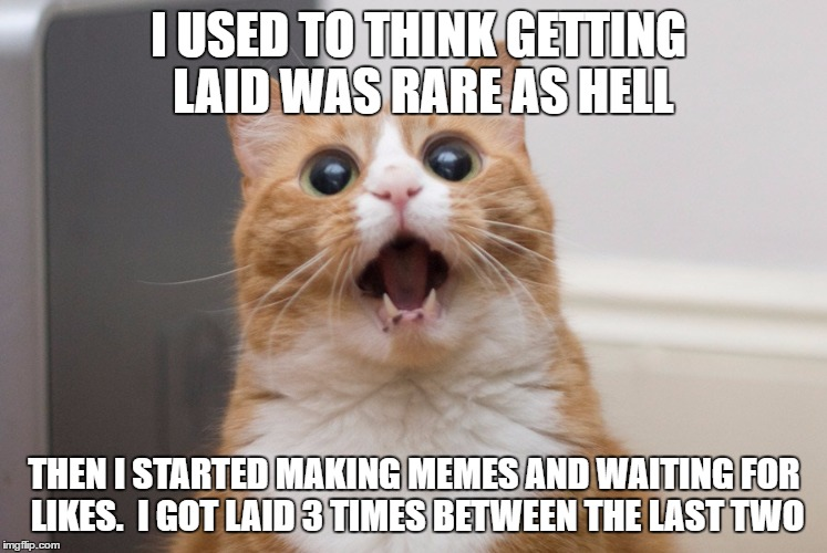 Amazed cat |  I USED TO THINK GETTING LAID WAS RARE AS HELL; THEN I STARTED MAKING MEMES AND WAITING FOR LIKES.  I GOT LAID 3 TIMES BETWEEN THE LAST TWO | image tagged in amazed cat | made w/ Imgflip meme maker